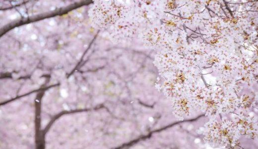 【税金の私物化】桜を見る会で安倍政権は終わりの始まり?